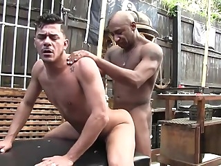 bareback brunette gay